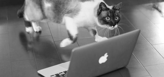 VODを選ぶ猫
